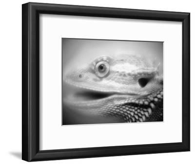 Side of Iguana's Face