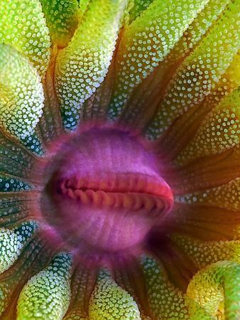 Cup Coral Portrait