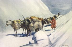 Yaks and Ponies Carrying Wool from Tibet into India by Henry Savage Landor