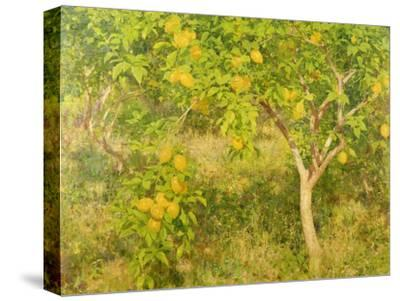 The Lemon Tree, 1893