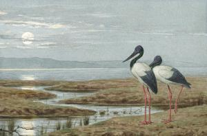 Birds Against a Stark Moonlit Landscape, c.1870-90 by Henry Stacey Marks