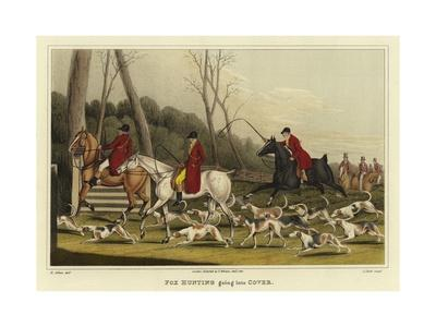 Fox Hunting Going into Cover