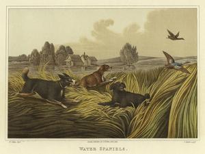 Water Spaniels by Henry Thomas Alken