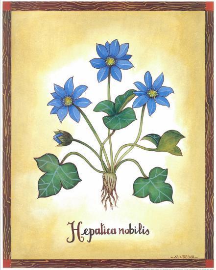 Hepatica Nobilis-Urpina-Art Print