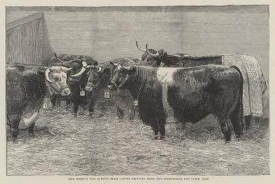 Her Majesty the Queen's Prize Cattle Brought from the Birmingham Fat Stock Show--Giclee Print