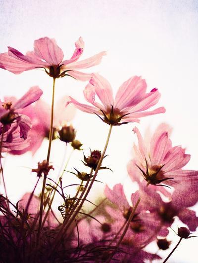 Her Secret Garden-Susannah Tucker-Photographic Print