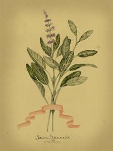 Herb Series I
