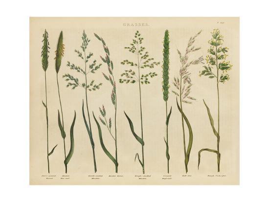 Herbal Botanical VII-Wild Apple Portfolio-Art Print
