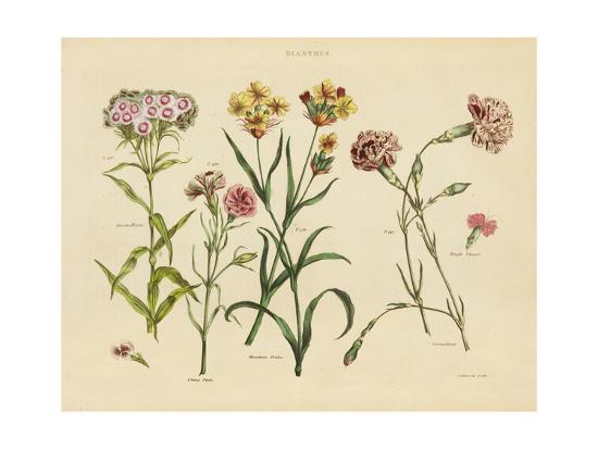 Herbal Botanical VIII-Wild Apple Portfolio-Art Print