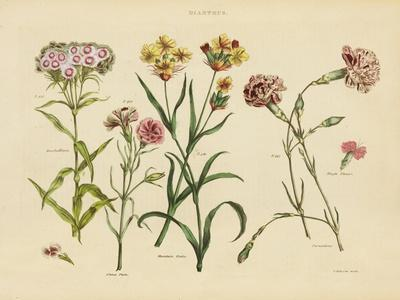 https://imgc.artprintimages.com/img/print/herbal-botanical-viii_u-l-q1buf7o0.jpg?p=0