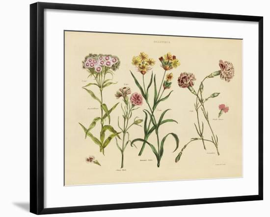 Herbal Botanical VIII-Wild Apple Portfolio-Framed Art Print
