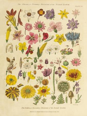 https://imgc.artprintimages.com/img/print/herbal-botanical-xi_u-l-q1bufte0.jpg?p=0