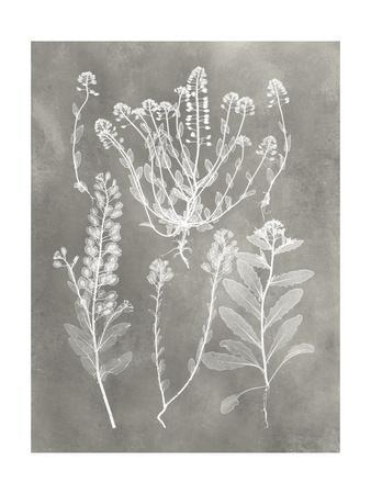 https://imgc.artprintimages.com/img/print/herbarium-study-iii_u-l-q19zx7r0.jpg?p=0