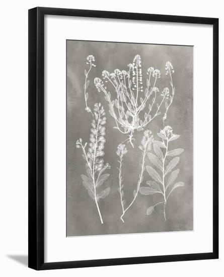 Herbarium Study III-Vision Studio-Framed Art Print