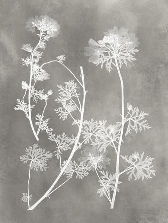 https://imgc.artprintimages.com/img/print/herbarium-study-iv_u-l-q19zxs90.jpg?p=0