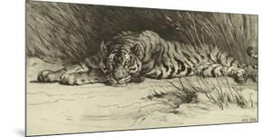 Tiger Resting by Herbert Dicksee