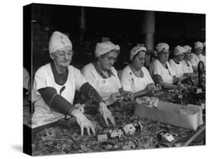 Women Packaging Bay Leaves in A&P Plant by Herbert Gehr