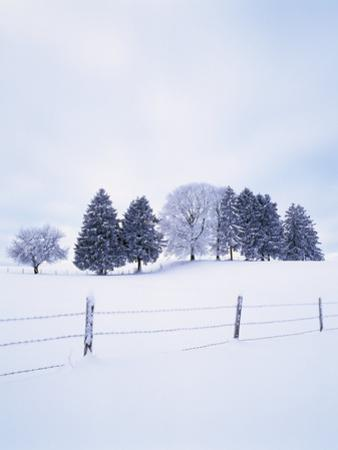 Germany, Bavaria, AllgŠu, Snow Scenery, Trees