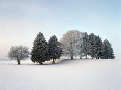 Landscape, Trees, Winter