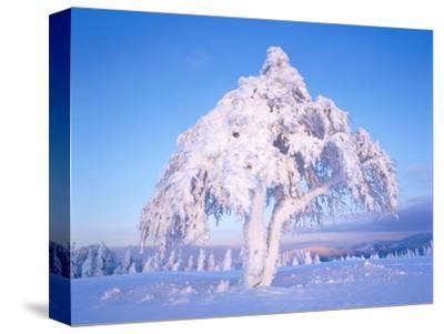 Snow scene in winter