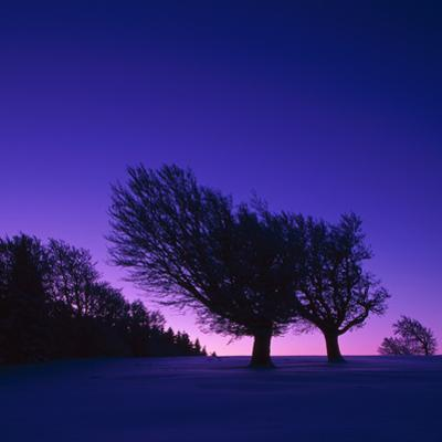 Winter-Landscape, Trees, Red-Beech, Fagus Sylvatica, Twilight