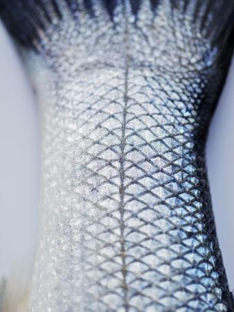 A Fishtail