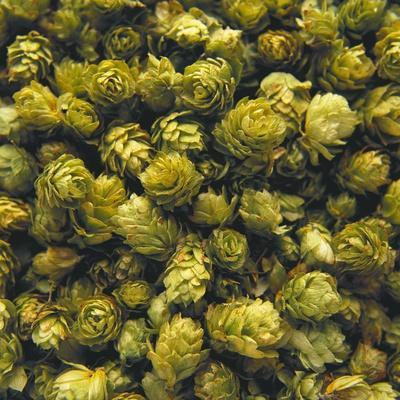 Hops (Filling the Picture)