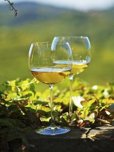Two Glasses of White Wine Against the Friaul Landscape of Italy by Herbert Lehmann
