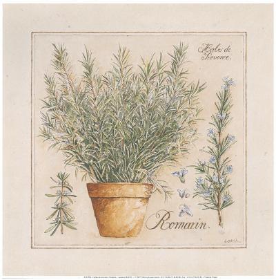 Herbes de Provence III-Laurence David-Art Print