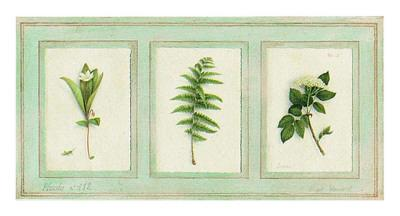 https://imgc.artprintimages.com/img/print/herbier-planche-112_u-l-f493rw0.jpg?p=0
