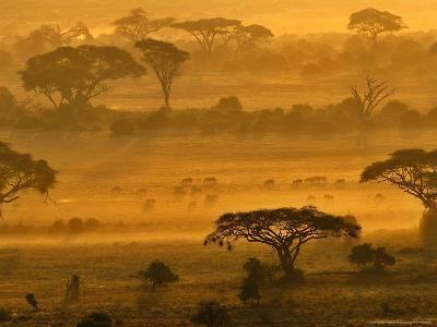 Herbivores at Sunrise, Amboseli Wildlife Reserve, Kenya-Vadim Ghirda-Photographic Print