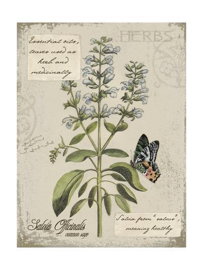 Herbs & Butterflies II-Kate Ward Thacker-Art Print