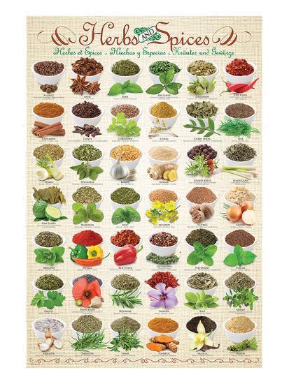 Herbs & Spices--Art Print