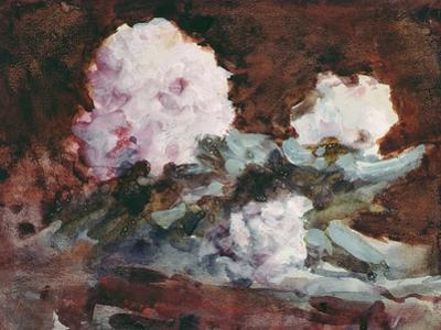 Rhododendrons by Hercules Brabazon Brabazon