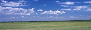 Herd of Bison on Prairie Cheyenne Wy USA