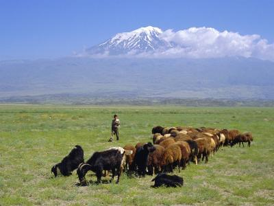 Herd of Goats and Goatherder in the Plains Beneath Mount Ararat, Turkey, Europe-Charles Bowman-Photographic Print
