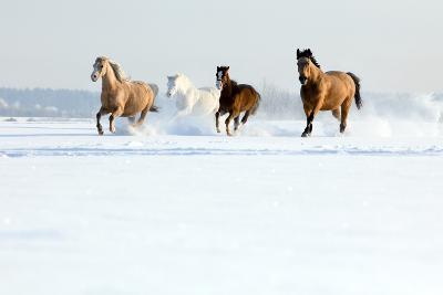 Herd of Horses in Winter-Alexia Khruscheva-Photographic Print