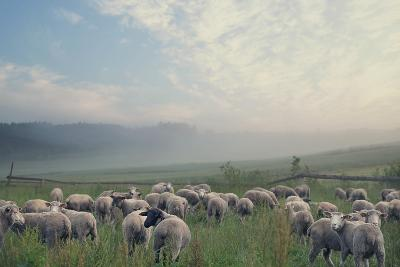 Herd Of Sheep On Beautiful Mountain Meadow-conrado-Photographic Print