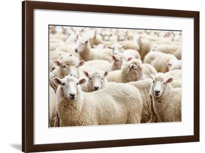 Herd of Sheep-DmitryP-Framed Photographic Print