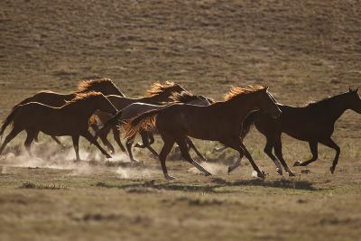 Herd of Stampeding Horses-DLILLC-Photographic Print