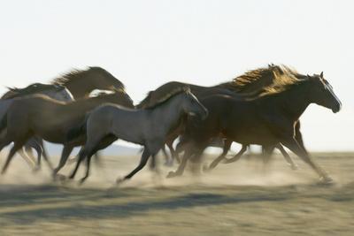 https://imgc.artprintimages.com/img/print/herd-of-stampeding-horses_u-l-pzs9kr0.jpg?p=0