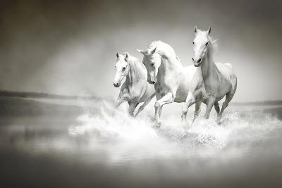 Herd Of White Horses Running Through Water-varijanta-Art Print