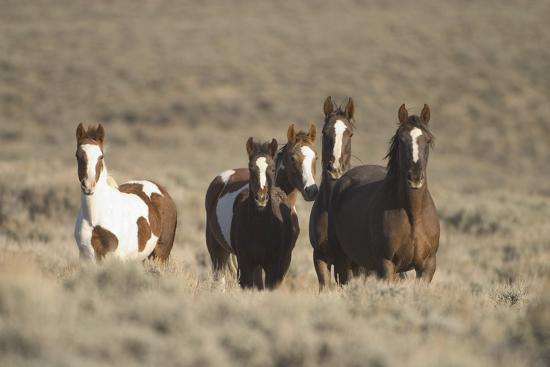 Herd of Wild Horses-DLILLC-Photographic Print