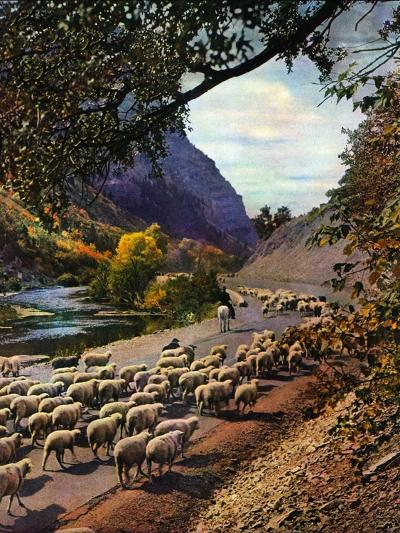 """Herding Sheep,""September 1, 1943-Mike Roberts-Giclee Print"