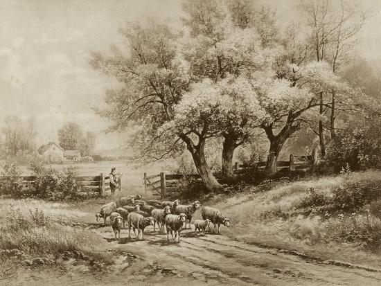 Herding Sheep-Carl Weber-Art Print