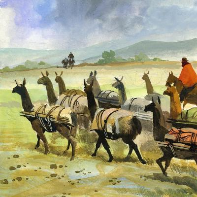 Herds of Llamas in the Andes-Ferdinando Tacconi-Giclee Print