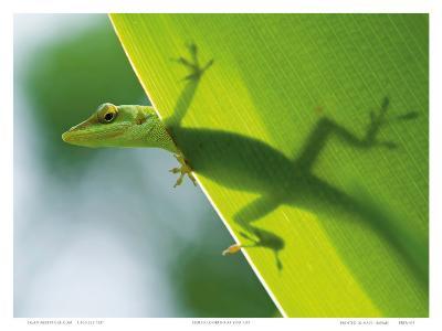 Here's Looking at You Kid, Hawaiian Green Gecko-Devon Stevens-Art Print