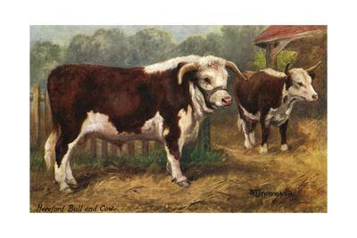 Hereford Bull and Cow 1912--Giclee Print