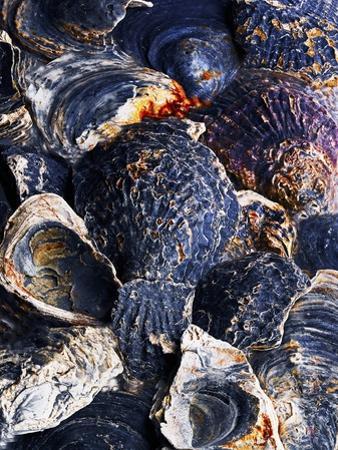 Oyster Shells by Hermann Mock