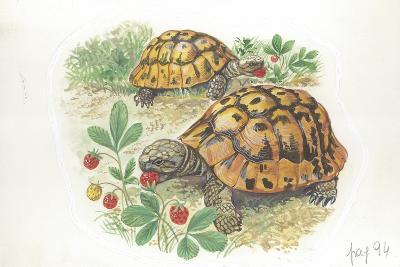 HermannS Tortoises Testudo Hermanni Eating--Giclee Print